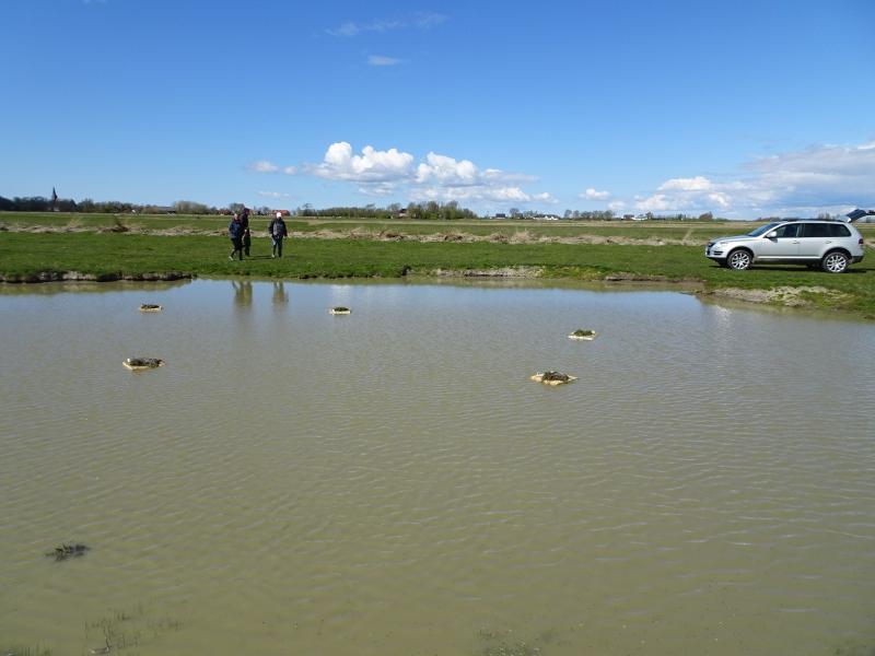 Auslegen von Flößen für Trauerseeschwalben