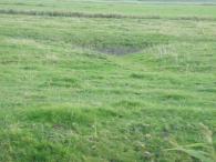 Vernässung in der Fläche, stocherfähiger Boden