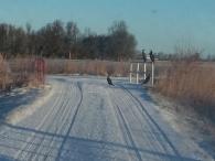 Kormorane im Winter an offenem Sielzug